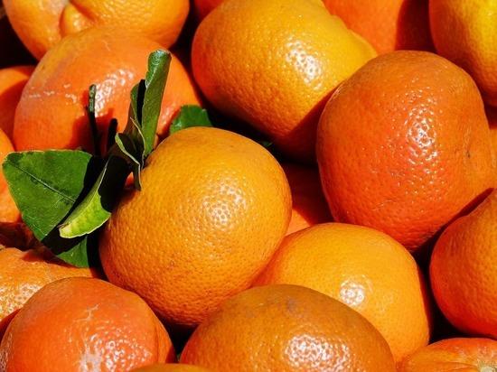 В партиях мандаринов, привезенных в Петрозаводск, нашли мертвых вредителей