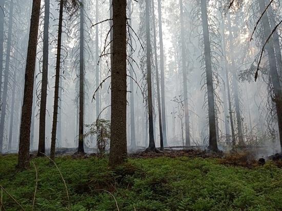 Как в Вологодской области проходит тушение лесных пожаров