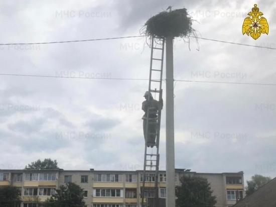 В Тверской области сотрудники МЧС вернули аистов в гнездо