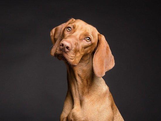 Ученые установили способность собак распознавать обман и анализировать ситуацию