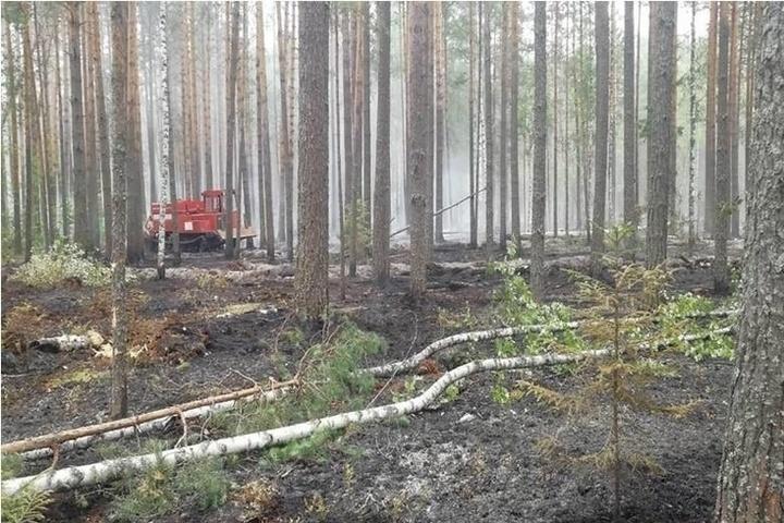 Хорошие новости из Кологрива: лесной пожар, похоже, удалось локализовать