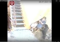 Собаки-агрессоры: Новосибирск захлестнула волна нападений злых питомцев на детей