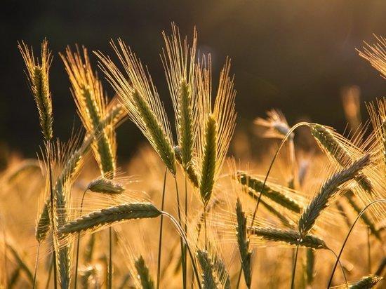 Саратовская область собрала два млн тонн зерна и выбилась в лидеры