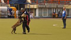 Фрагменты выступления победителя Кубка России по национальным видам дрессировки, прошедшего в Кемерове