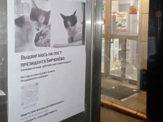 Жителям Москвы предложили выбрать президентом кота