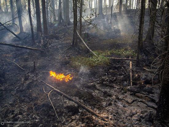 В Карелии зафиксированы случаи возгорания на старых пожарах