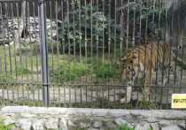 В честь Международного дня тигра зоосад «Приамурский» имени В. П. Сысоева провел первый краевой инклюзивный творческий конкурс «Тигр - северных джунглей хозяин. Мы его любим и сохраняем!»