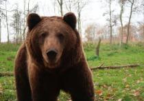 Всю Россию в среду, 28 июля, облетела новость о нападении медведя в природном парке Ергаки в Красноярском крае