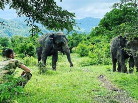 В Сочи открыли санаторий для цирковых слонов