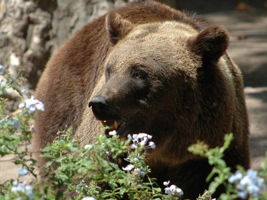 В районе 9 озер хребта Араданский в природном парке «Ергаки» на юге Красноярского края было обнаружено тело 42-летнего москвича Евгения Старкова, которого растерзал медведь