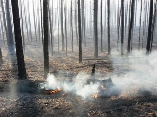До 19 августа в Марий Эл действует особый противопожарный режим