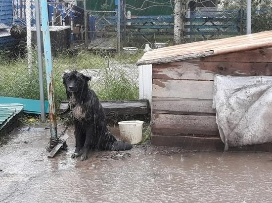 Хозяйка оставила собаку под проливным дождем в Ноябрьске