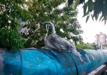 У Нового рынка уберут лебедей с путепровода и перенесут в другое место