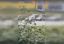 В Петербурге задержали обнаженного мужчину, бросавшегося на автомобили