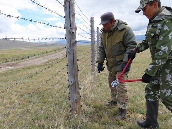 Звери не знают преград: на алтайской границе России и Монголии уберут колючую проволоку