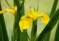 Конец лета – время, когда можно успеть высадить некоторые цветы – определенные сорта предпочитают для посадки именно август, пишет Ogorod