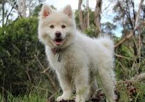 Неизвестные отравили домашнюю собаку в Ноябрьске
