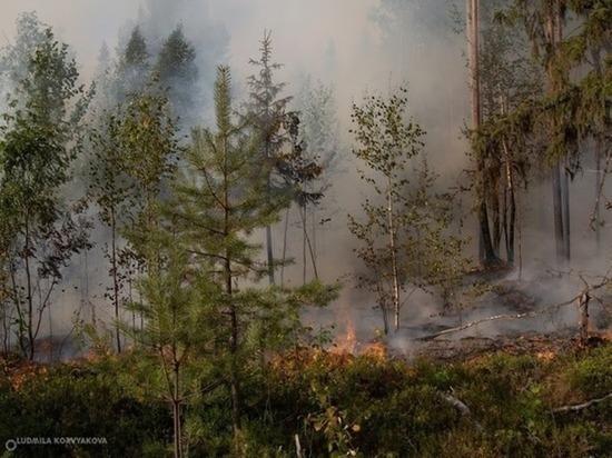 Пожары в Карелии локализованы, но не потушены