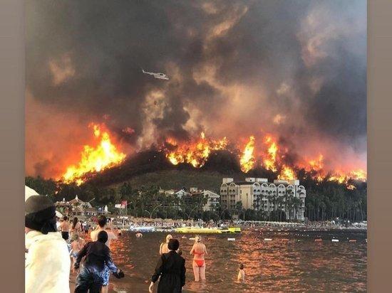 Турция выделила $6 млн на устранение ущерба от лесных пожаров