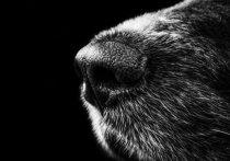 Власти австралийского Мельбурна сообщили о начале расследования массового загадочного отравления собак, пишет The Daily Mail