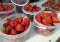 Роспотребнадзор поделился полезными советами, как выбирать ягоды