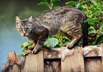 В геномах человека и кошки было найдено больше сходств, чем у человека с собакой или крысой, рассказали ученые из Университета Миссури