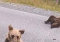 Почесывают животики: двоих медвежат снова сняли на видео на дороге в ЯНАО