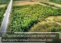 Сосновый бор за 40 миллионов появится в Пуровском районе