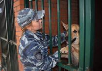 Овчарка Раза помогла поймать вора в Новосибирской области