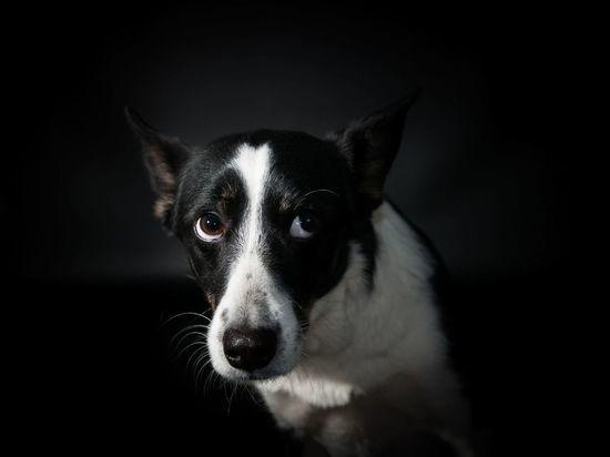 Новгородцы жалуются на вой собаки, которая уже пятый год живет в багажнике припаркованного на улице Свободы авто