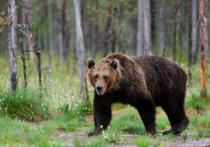 На красноярском форуме, посвященном походам, участники делились историями многочисленных встреч с наглым и неадекватным медведем в районе долины 9 озер на Араданском хребте