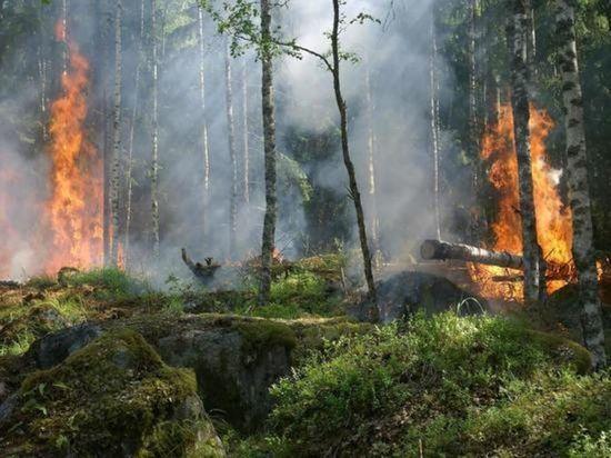 В России за сутки почти на 90 тысяч га возросла площадь лесных пожаров