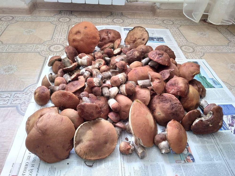 Насобирали полные ведра: жители Ноябрьска хвастаются урожаем грибов