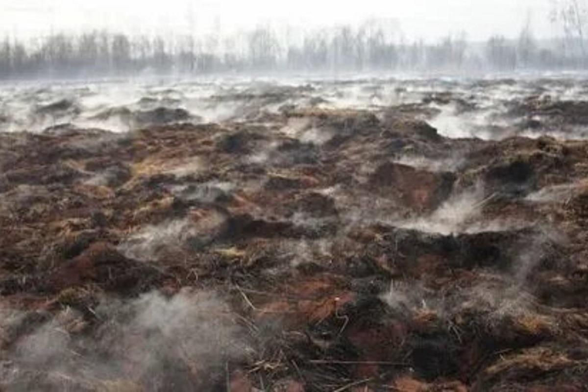 В Нерехтском районе костромские пожарные оперативно ликвидировали торфяной пожар