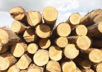 97% томского экспорта древесины пришлось на обработанные лесоматериалы