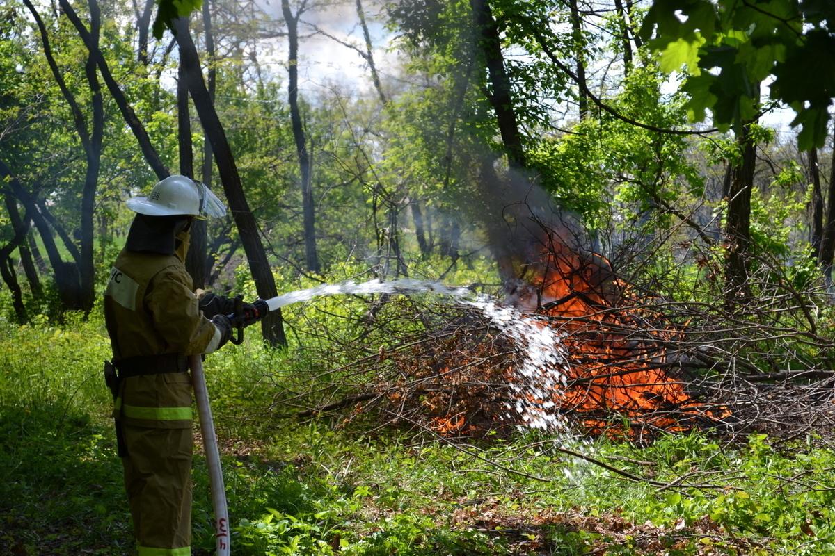 Костромские парадоксы: тушению пожара в Кологривском лесу помешал  дождь