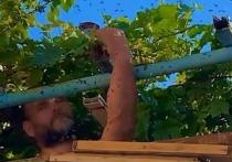 В Анапе мужчина голыми руками разобрал улей с 7 тысячами пчёл