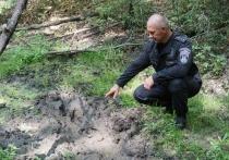 В Белгородской области будут следить за численностью диких кабанов