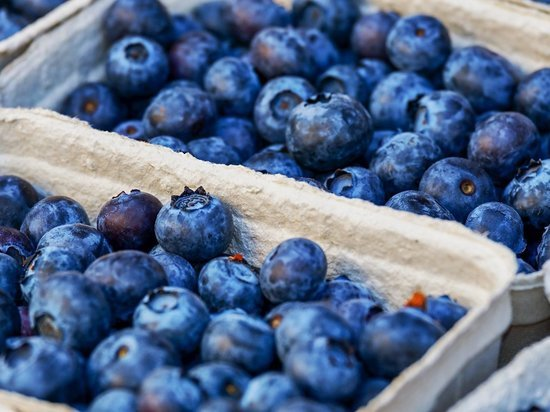 Почти 500 тонн свежих ягод ввезли в Псковскую область за июль