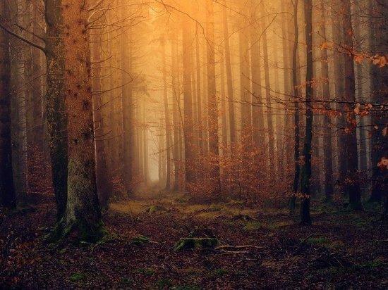 В Приморье контрабандисты вывезли из РФ в Китай лес на 441 млн рублей