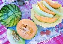 Вкусные и сочные дыни и арбузы становятся любимым лакомством у жителей Алтайского края в августе