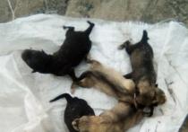 Новорожденных щенков выбросили в кювет у дороги в Салехарде