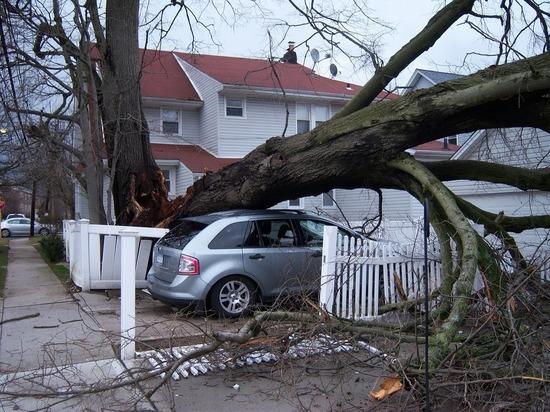 В Московской области из-за сильного ливня повалило деревья, повреждены автомобили