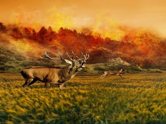 Рослесхоз связал лесные пожары с глобальным потеплением