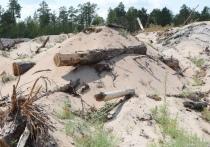 Десятки миллионов рублей от продажи кварцевого песка против сохранения реликтового бора – в Иркутском областном суде набирает обороты дело Янгелевского ГОКа против минприроды региона