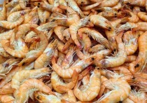 В Анапе рыбака осудили за ловлю креветки