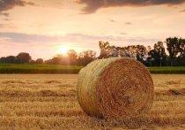 1 августа в Белгородской области стартовала сельскохозяйственная микроперепись