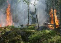 Особый противопожарный режим отменили в Псковской области