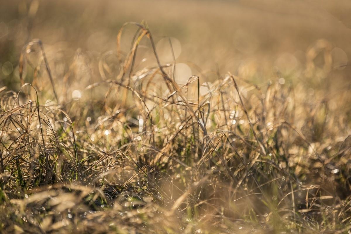 В Костромской области сельхозпредприятия несут ущерб из-за засухи