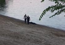 По сообщению в местных СМИ, происшествие произошло в воскресенье, 1 августа